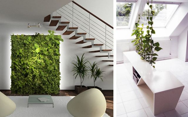 Ideas para decorar con plantas for Plantas verticales de interior