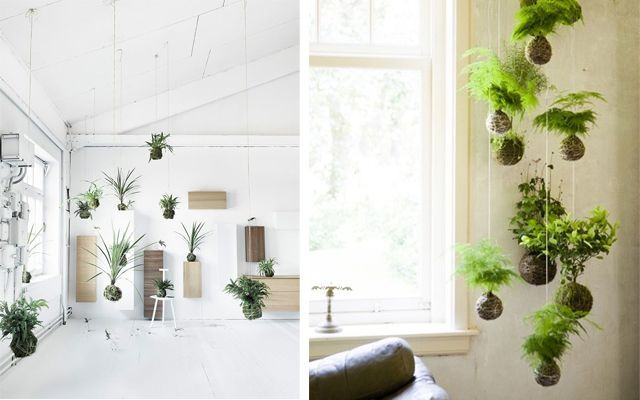 Ideas para decorar con plantas for Decoracion de oficinas con plantas