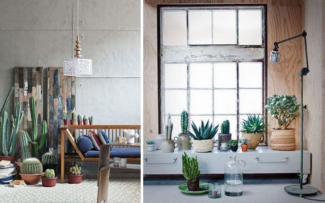 Ideas para decorar con cactus - Decorar con plantas el salon ...