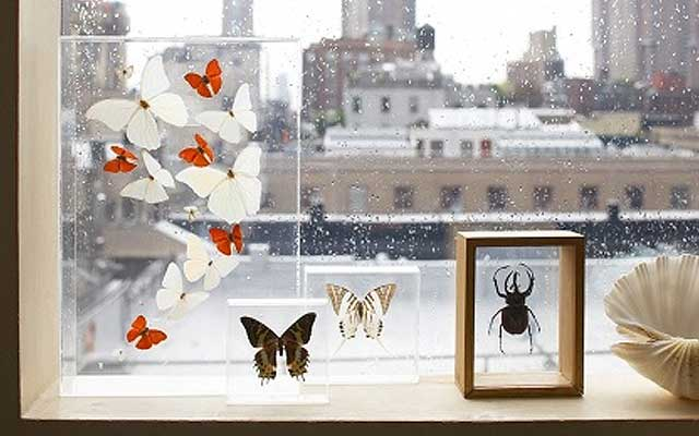 decorar con insectos