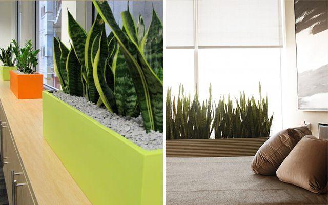 Las plantas preferidas por los decoradores e interioristas