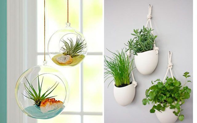 Ideas originales para decorar la cocina con plantas for Decoracion de oficinas con plantas